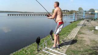 tołpyga z rybnika