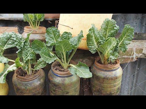 Kenya: Growing vegetables in plastic