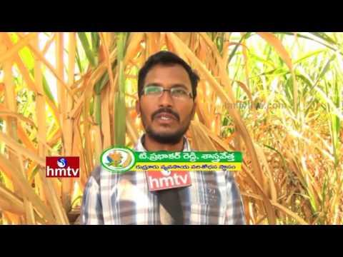 High Yield Sugarcane Cultivation |  Guava Varieties - Farming Techniques  | Nela Talli | HMTV