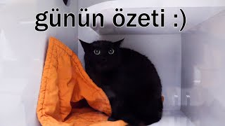 VetLOG 😉 Saldırgan Köpek MİA 😳 Kedi Akneli Kardeşler! Ekibin Kameraya Tepkisi @DoBiDa 268