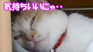 猫にクールジェルマットをプレゼントしたらあまりの気持ちよさにすごい顔に‥ Cat receiving a cold mat thumbnail