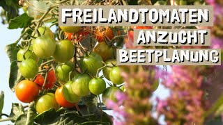 Erfolgreich Freilandtomaten anbauen - Besonderheiten bei der Voranzucht und Beetplanung
