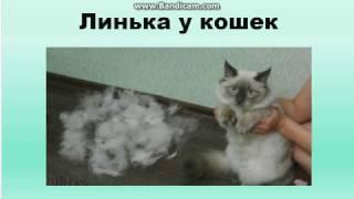 Кошка линяет.Что делать?#Кошки