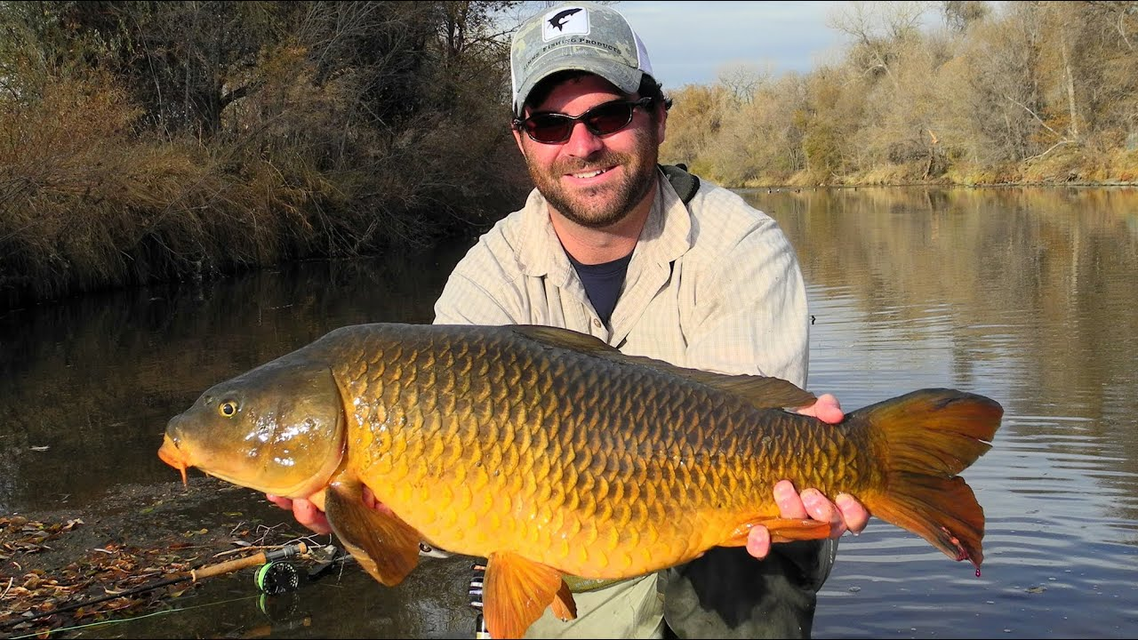 Fly fishing for carp urban carp fly fishing youtube for Fly fishing carp