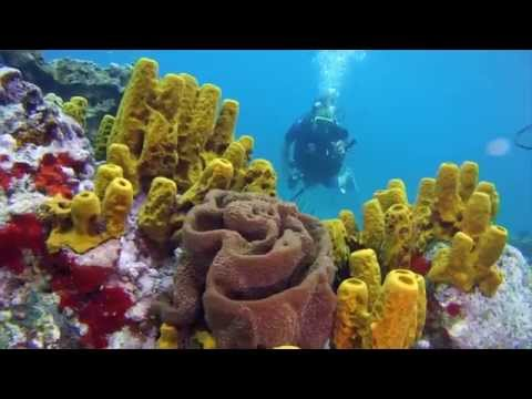 Coral and Fish Life at Anse Chastanet (Shot in 1 Day of Filming)