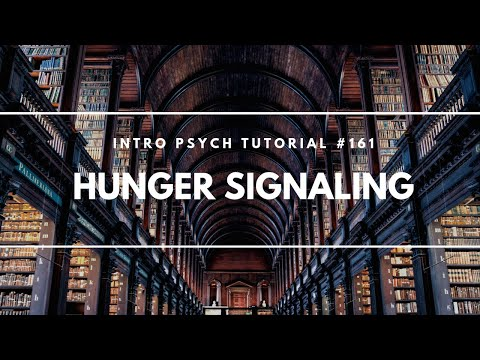 Hunger Signaling (Intro Psych Tutorial #161)