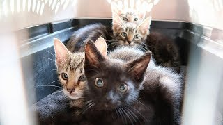4-abandoned-kittens-rescued-from-life-on-the-streets