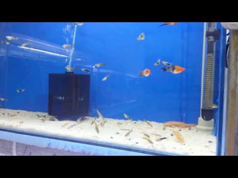 Hobihanem - 1000 Abone (Teşekkürler Videosu)