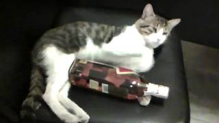 There is a whiskey time for every cat... The name of cat is Mincho.