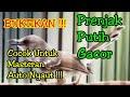 Masteran Prenjak Putih Nembak Prenjak Gacor  Mp3 - Mp4 Download