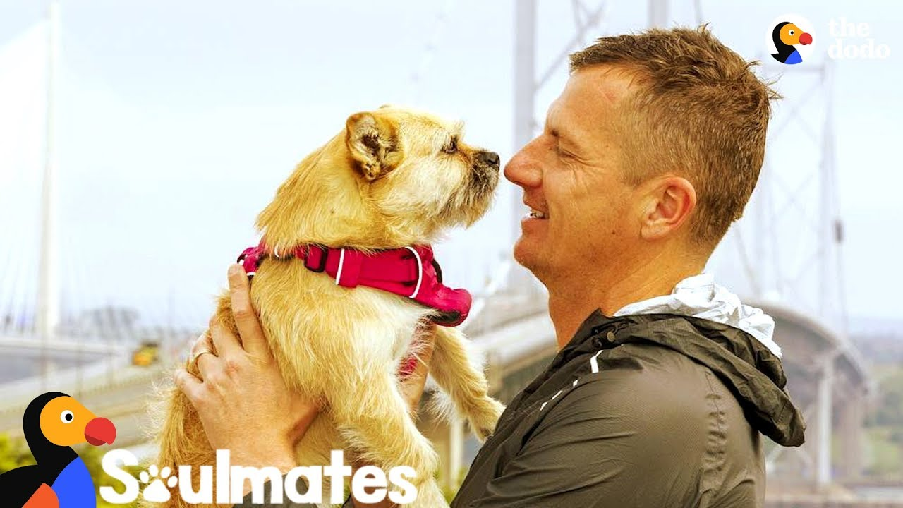 Guy Adopts Stray Dog Who Followed Him On Race The Dodo Soulmates