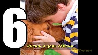 Жизнь и цель собаки | Брюс Кэмерон  6 из 7