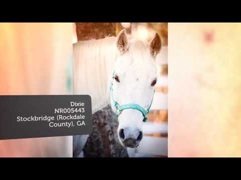 Horse Scam Warning  Watch this  Before Rehoming Your Horse