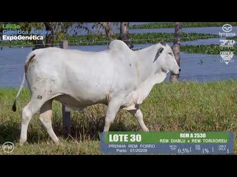 LOTE 30 - Leilão Genética Aditiva ExpoGenética 2019