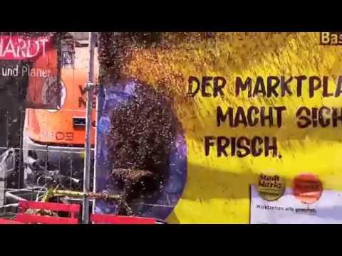 Die Bienen Sind LOS In Basel! Dieser Schwarm Ist GROSS
