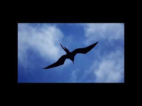 Tortoise - Galapagos 1 (Spring Heel Jack Remix) mp3