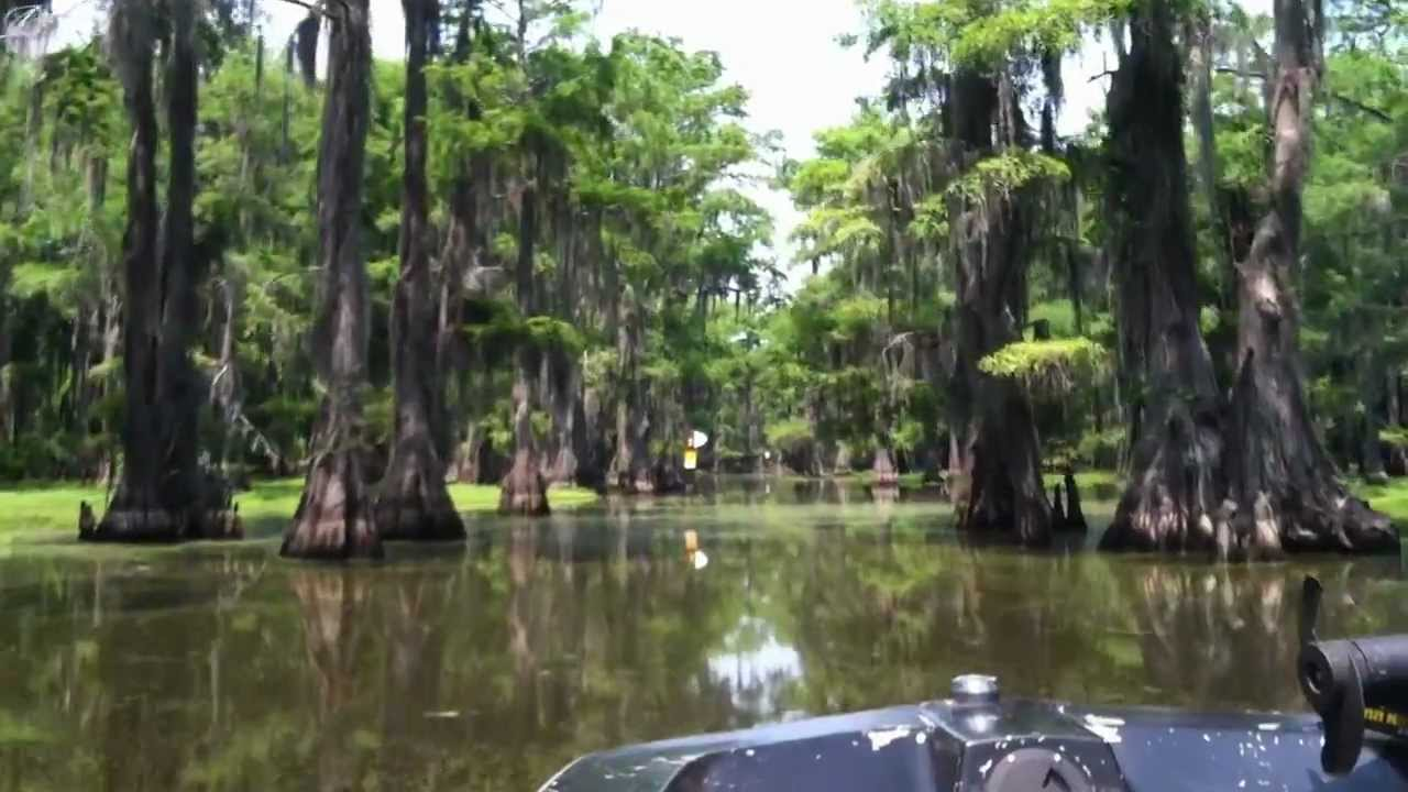 Running the boat lane caddo lake texas memorial day 2012 for Caddo lake fishing