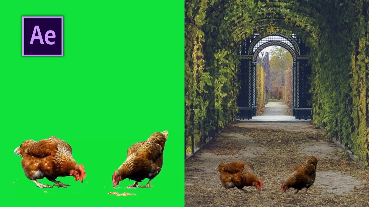 Download How to Remove Green Screen in Adobe After Effects CC 2018 and change Background