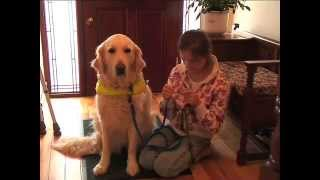Irish Dogs For The Disabled - Information Video
