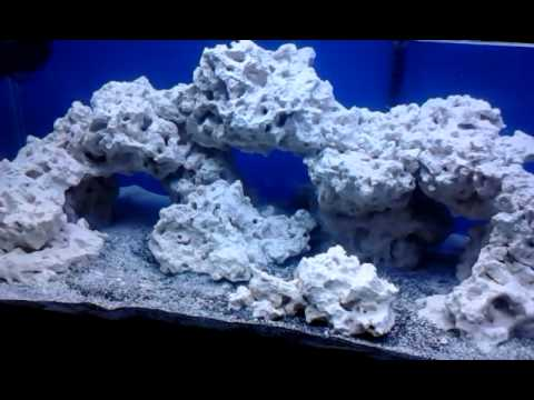 40 gallon aquascape and 6 bulb t5 reef light demo - YouTube