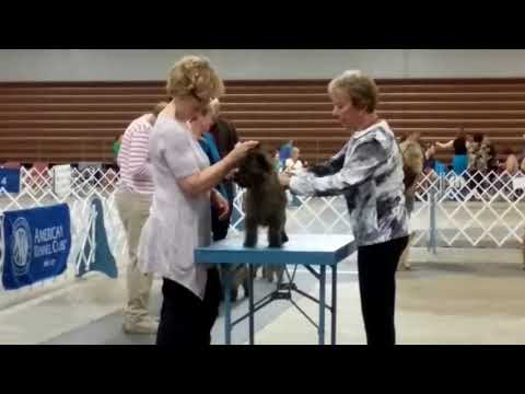 Widget Best of Breed - Rochester, Mn 9/16/2017 - Ms Marjorie J Underwood