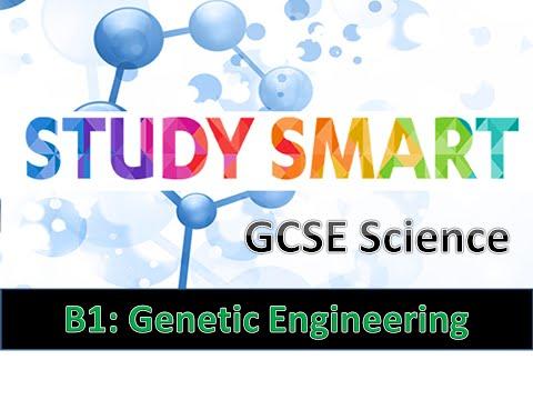 B2 Genetic Engineering & The Human Genome Project (EDEXCEL)
