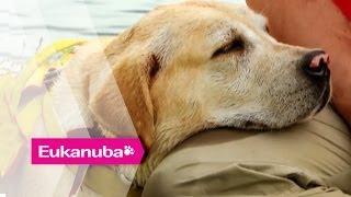 Heldenhafte Hunde, die aus Hubschrauber springen - Teil 2 | Außergewöhnliche Hunde