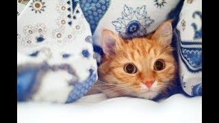 ПРИКОЛЫ с животными до слез 🔴 Видео зборник Смешные КОШКИ и СОБАКИ 2018