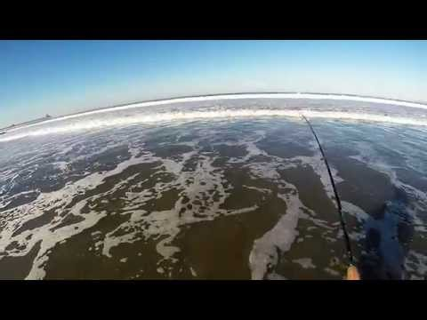San Diego Surf Fishing: (Imperial Beach) - Barred Surf Perch XX-JAN -2015