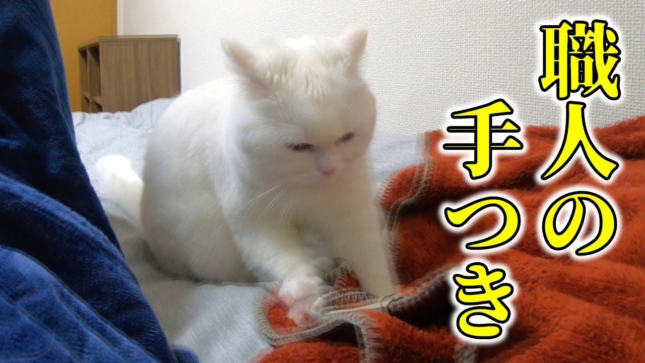 猫 ふみ ふみ しない