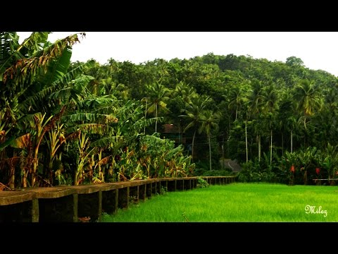 Kerala God's own country 2014 trip