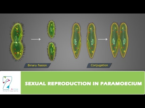 Does protists reproduce sexually or asexually