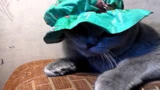 Кошка в берете