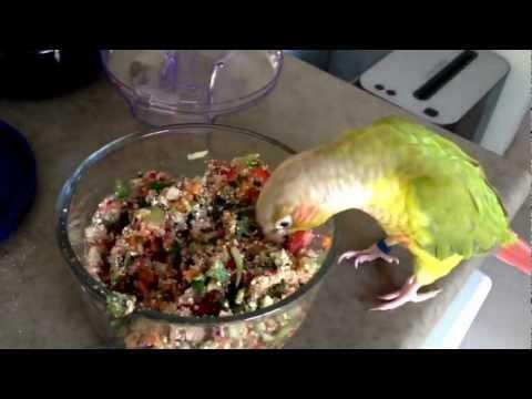 how-to-make-fresh-birdy-mash
