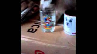 Мой кот. Пьет из. Стакана