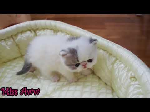 Cute Little Kitten Sneezes