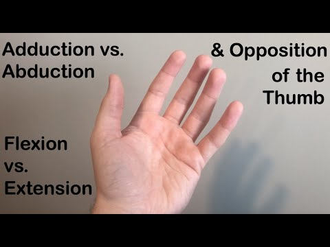 Abduction vs. Adduction, Flexion vs. Extension and Opposition of the Thumb
