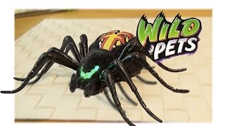 """Электронный Паук """"Интеллектуал"""" - Wild Pets Spider - Игрушка Паук"""