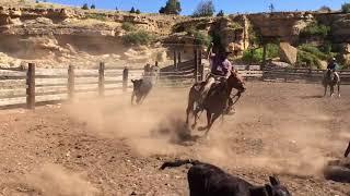 Convoyage de chevaux dans le Montana