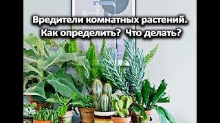 Вредители комнатных растений. Как определить? Что делать?