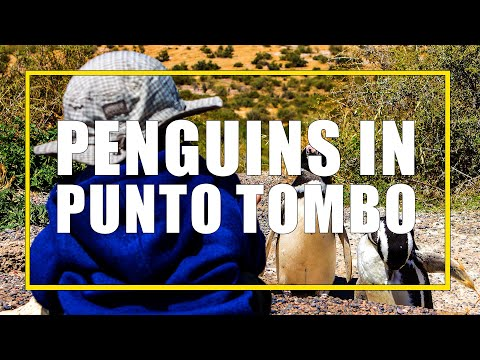 Visiting Penguins in Punta Tombo, Argentina with Kids