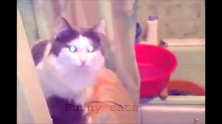 Funny Videos 2014 - Funny Cats Video - Funny Cat Videos Ever - Funny Animals Funny Fails 2