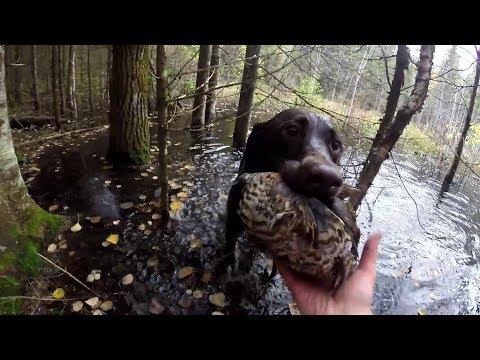 Epic Ruffed Grouse Shot | Water Retrieve