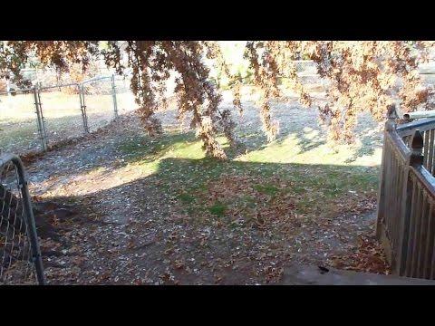 Swedish Vallhunds Apollo Arwen and Herm Watch Big Melt After Ice Storm