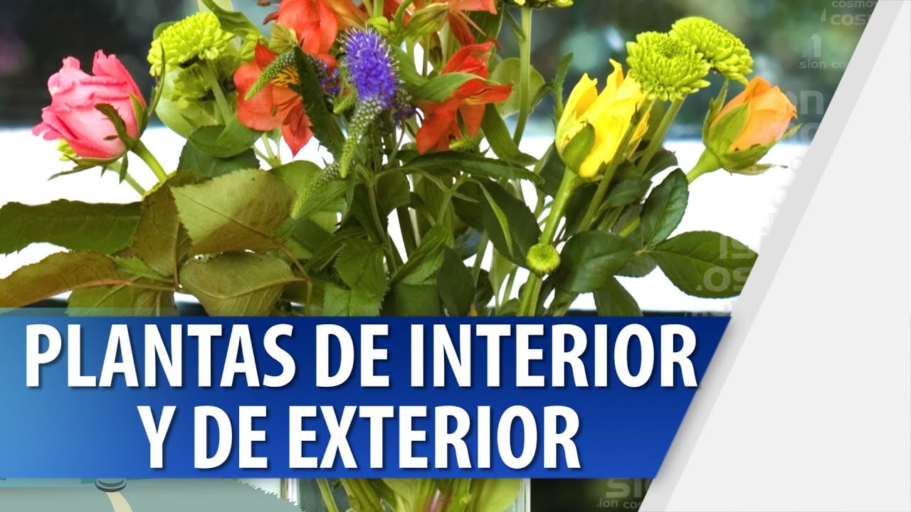 C mo escoger plantas de interior y de exterior youtube for Interior y exterior