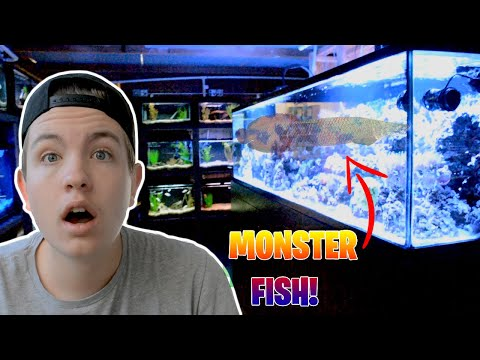 MONSTER *EXOTIC* FISH Stores In California!!