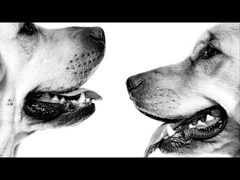 Royal Canin | Breed Specific Dog Food  Incredible in Every Detail