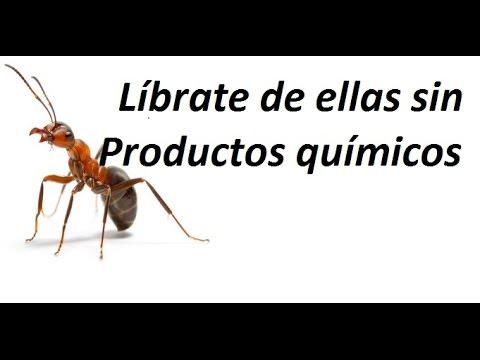 Repelente casero para combatir las hormigas funnydog tv for Como acabar con las hormigas del jardin