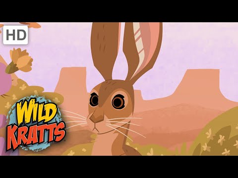 Wild Kratts | Kratts Find A Jack Rabbit | Creatures
