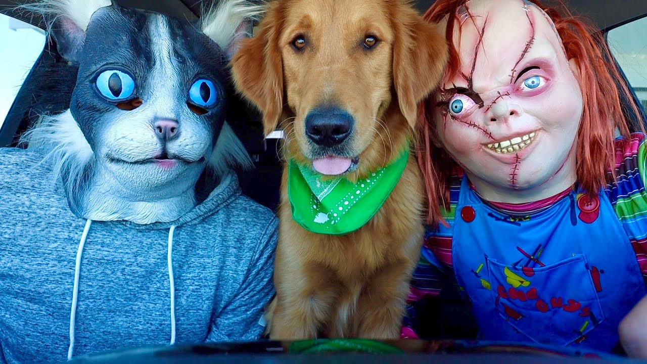 Chucky Surprises Cat & Puppy with Dancing Car Ride!